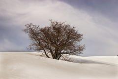 Der tote Apfelbaum Lizenzfreie Stockfotos