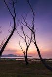 Der tote Baum Stockfotografie