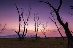 Der tote Baum Lizenzfreies Stockbild