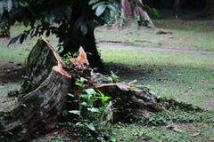 Der tote Baum im Park Lizenzfreies Stockbild