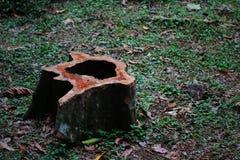 Der tote Baum im Wald Lizenzfreie Stockbilder