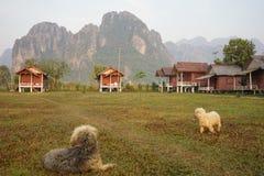 Der touristische Bungalow und die Hunde stockfotos