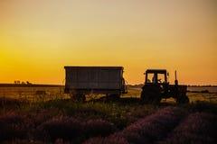 Der Traktor-Antrieb durch das Weizen- und Lavendelfeld Stockbild