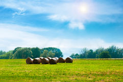 Der Traktor auf dem Feld erfasst Heu Lizenzfreie Stockfotografie