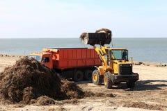 Der Traktor lädt Algen in LKW Stockfotos