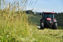 Der Traktor schneidet das Gras auf der Wiese Fokus auf Gras stockfotos