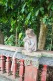 Der traurige Affe, der auf einem Zaun sitzt Stockbilder