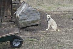 Der traurige Hund Lizenzfreie Stockbilder