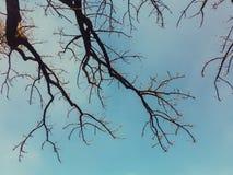 Der trockene Baum und der Himmel Stockfoto