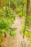 Der tropische Garten Lizenzfreie Stockfotos
