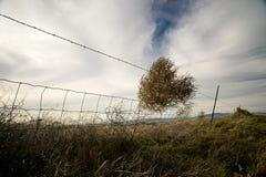 Der tumbleweed-Zaun Stockfotografie