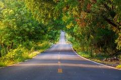 Der Tunnel von Bäumen und von leerer Straße Stockbilder