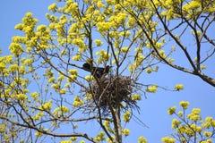 Der Turm kostet in einem Nest auf Niederlassungen des blühenden Ahorns Lizenzfreie Stockfotos