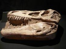 Der Tyrannosaurus - Form der Hirnschale stockbild