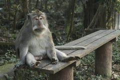 Der Ubud-Affe-Wald ist ein Komplex des Naturreservats und des hindischen Tempels in Ubud, Bali, Indonesien Lizenzfreies Stockbild
