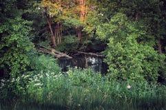 Warmer Sommertag auf der Ufergegend Stockbild