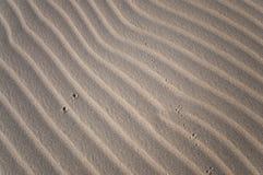 Der unknow Abdruck in der Wüste Lizenzfreie Stockbilder