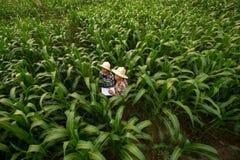 Der unterrichtende Student des Landwirts genießen zusammen in archiviert lizenzfreie stockfotos