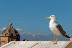 Der unverschämte Vogel in der Stadt Lizenzfreie Stockbilder