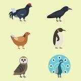 Der Vektorillustration der Vogelspeziessammlung tropische Federhaustiere unterschiedlichen des wilden Tieres Avifauna Charaktere Lizenzfreie Stockfotos