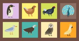 Der Vektorillustration der Vogelspeziessammlung tropische Federhaustiere unterschiedlichen des wilden Tieres Avifauna Charaktere Lizenzfreies Stockbild