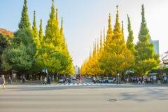 Der Verkehr auf der Straße unter Ginkgobäumen an Allee Icho Namiki Lizenzfreie Stockfotografie