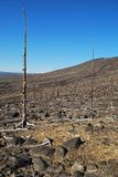 Der verlorene Wald Lizenzfreie Stockbilder
