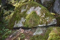 Der versteckte Code unter einem Flussstein lizenzfreie stockfotos