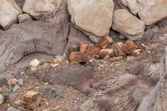 Der versteinerte Wald, Arizona stockfoto