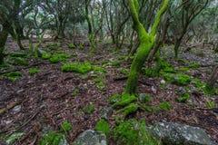 Der verzauberte Wald auf der ` veliki Brijun-` Insel Stockfoto