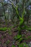 Der verzauberte Wald auf der ` veliki Brijun-` Insel Stockbild