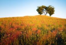 Der vibrierende gelbe Hügel, der mit dichtem Gras mit einem Herzen bedeckt wurde, formte Baum auf die Oberseite des Hügels mit un vektor abbildung