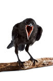 Der Vogel Lizenzfreie Stockfotos