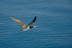 der Vogel Lizenzfreie Stockfotografie