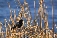 der Vogel Stockbild