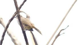 Der Vogel auf dem Baumast stock video