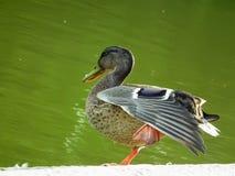 Der Vogel auf der Bank von einem Teich lizenzfreie stockfotografie