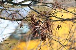 Der Vogel auf einer Niederlassung der Anfang des Frühlinges Stockbilder