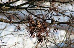 Der Vogel auf einer Niederlassung der Anfang des Frühlinges Lizenzfreie Stockfotografie