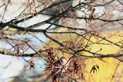 Der Vogel auf einer Niederlassung der Anfang des Frühlinges Stockfotos