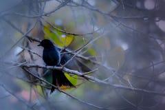 Der Vogel, der auf Niederlassungen sitzt Lizenzfreie Stockfotografie