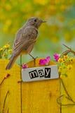 Der Vogel, der an einem Mai gehockt wurde, verzierte Zaun Stockfoto
