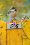 Der Vogel, der an einem Mai gehockt wurde, verzierte Zaun Lizenzfreie Stockfotografie