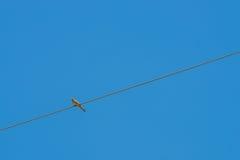 Der Vogel hockte auf einer Kabelleitung auf Himmelhintergrund Lizenzfreies Stockbild