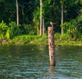 Der Vogel sitzt auf einem Klotz, der im Wasser steht Lizenzfreies Stockbild