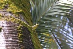 Der Vogel steht auf einer Palme still stockfotos
