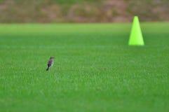 Der Vogel und der Kegel Lizenzfreie Stockfotos