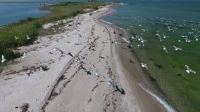 Der Vogelflug über dem Ufer Ansicht von der Höhe stock video