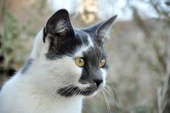 Der vorsichtige Blick einer Katze Lizenzfreie Stockfotografie