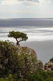 Der Wacholderbuschbaum auf eine Klippe gegen das Meer Stockbilder